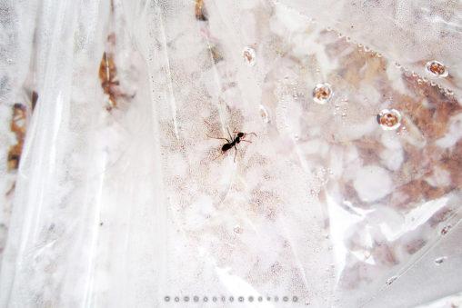 in plastic Kodaira 2012 © Wanda Proft, WANDALISMUS.INK