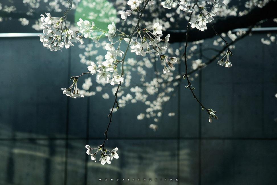 Sakura Kodaira 2012 © Wanda Proft, WANDALISMUS.INK